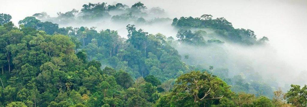 Wald Brasilien