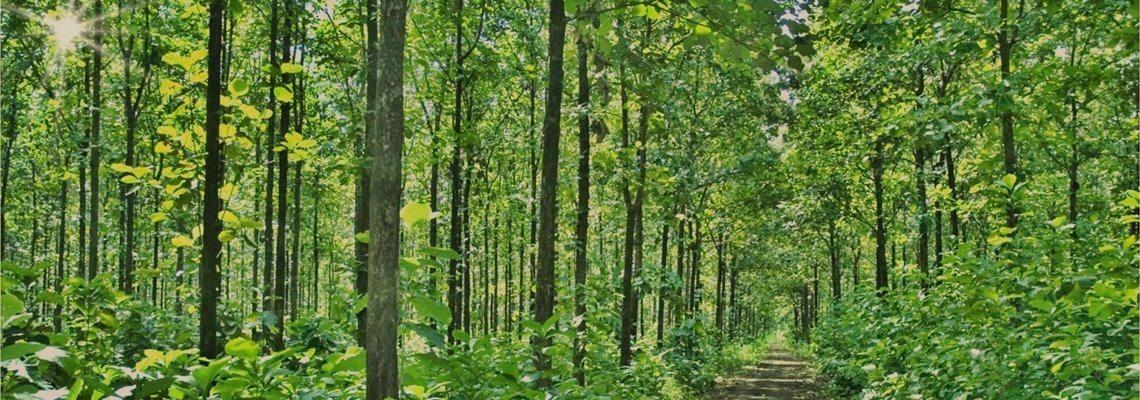 Holz aus indonesien unser teakholz for Kann terrassenplaner