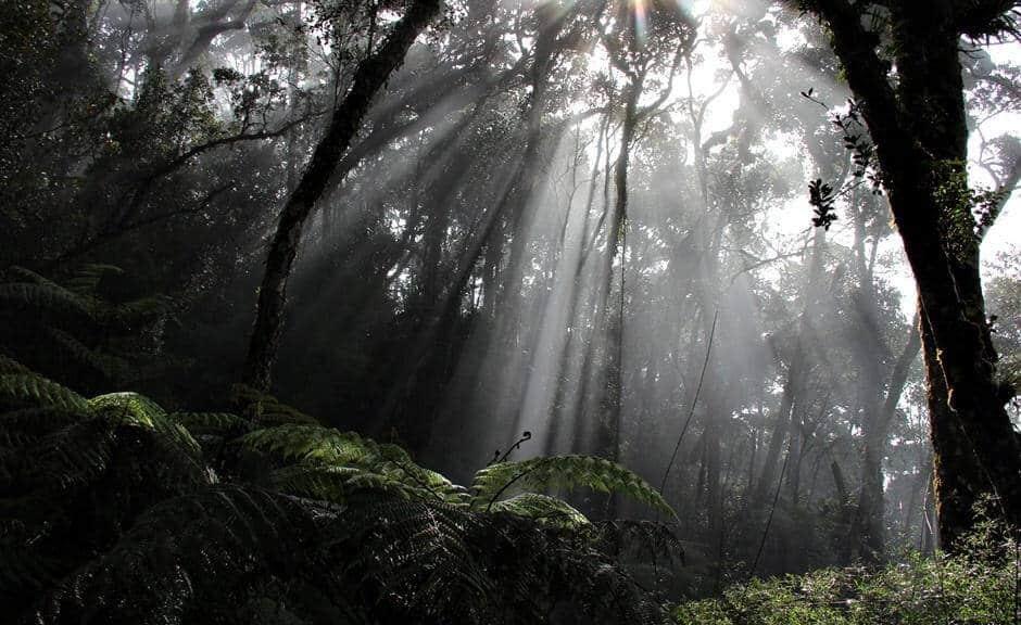 Regenwald Klänge