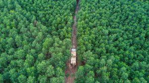 FSC Waldfläche wächst