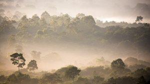Regenwald Brasilien
